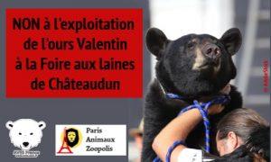 Ours Valentin [Image Pétition Châteaudun]