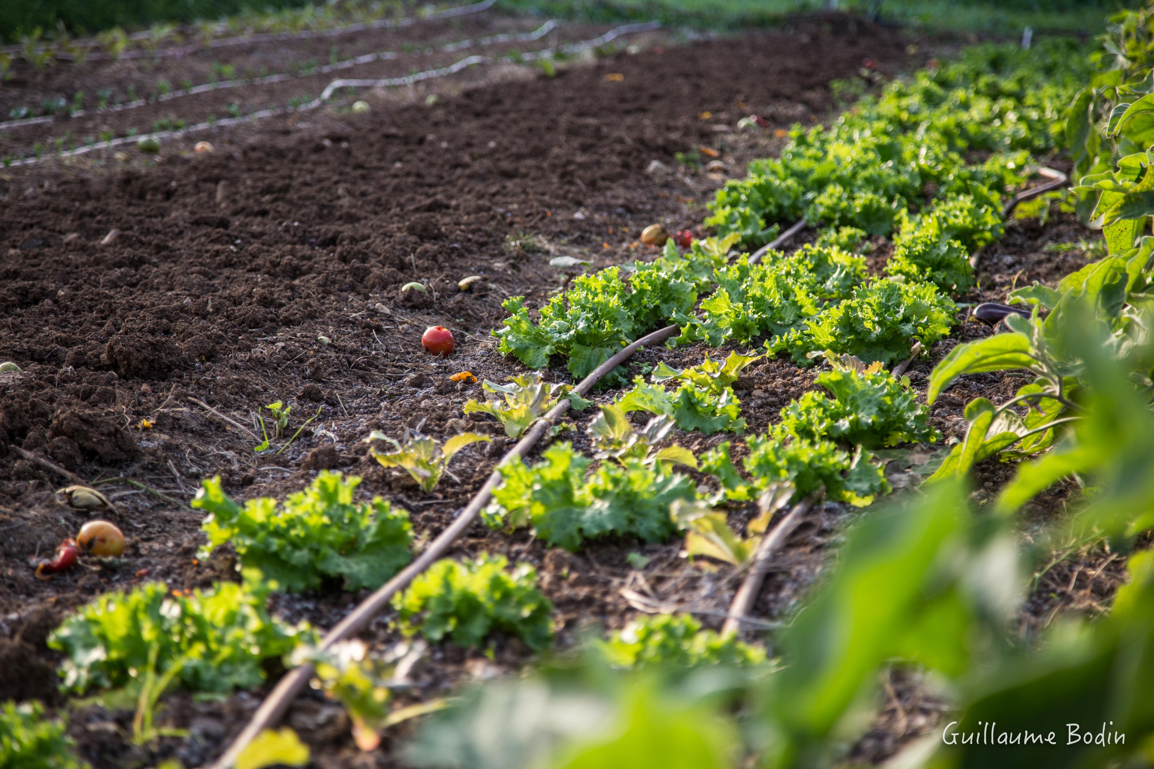 0 Phyto 100% Bio -Regie-agricole-bio-Mouans-Sartoux