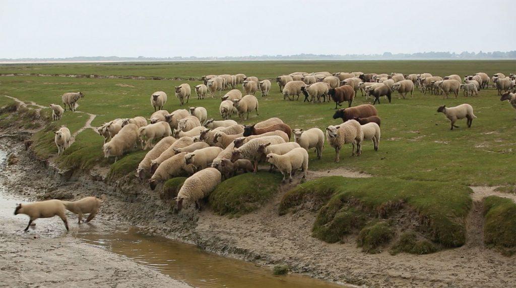 Jeune bergère [Photo 6]