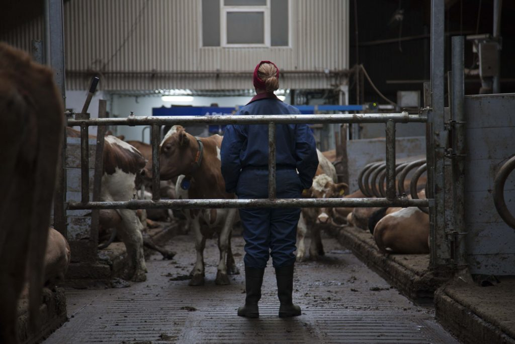 Mjólk, la guerre du lait [Photo 3]