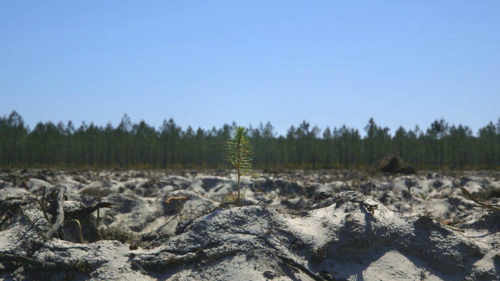 Le Temps des forêts [Photo 1]