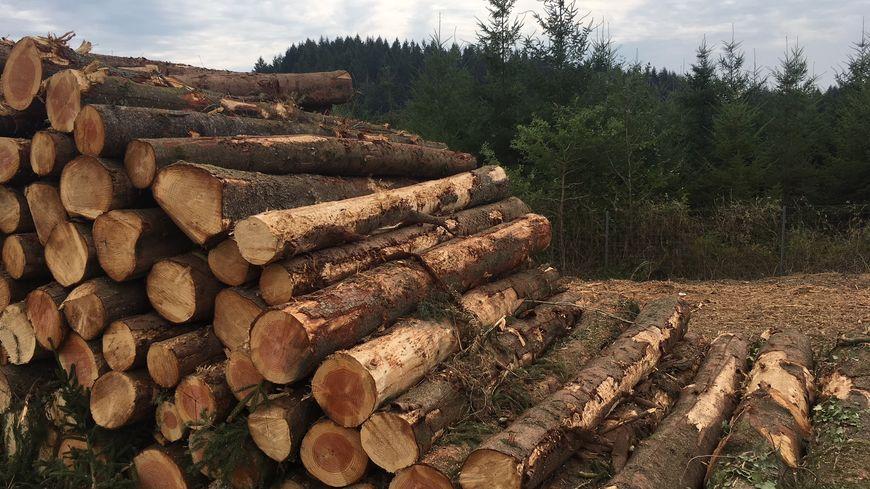 Le Temps des forêts [Photo 2]