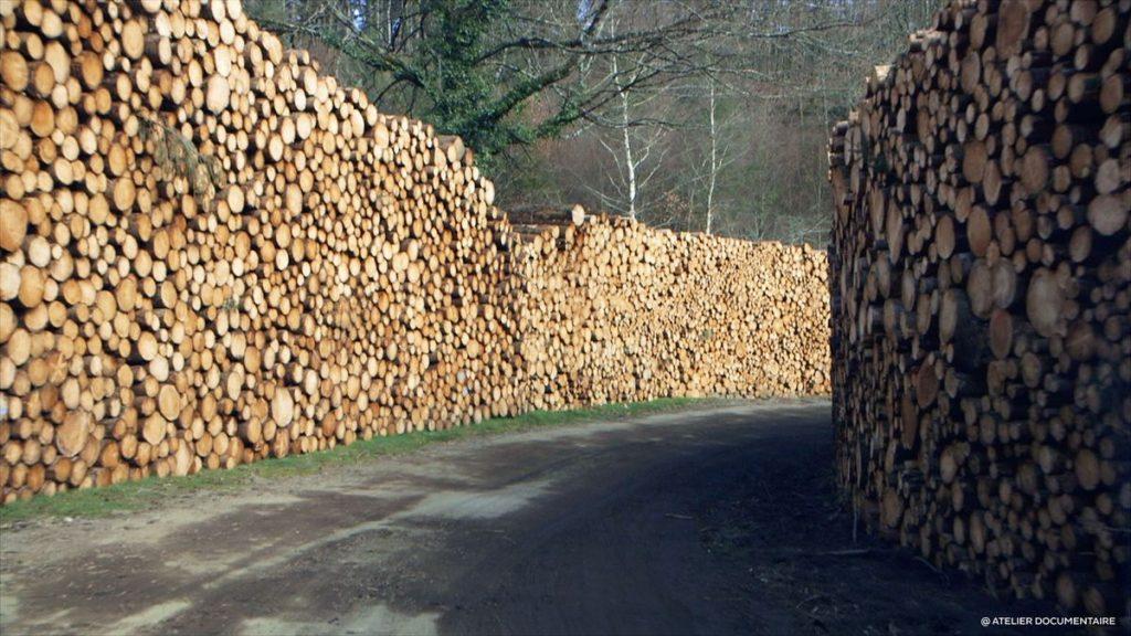 Le Temps des forêts [Photo 4]