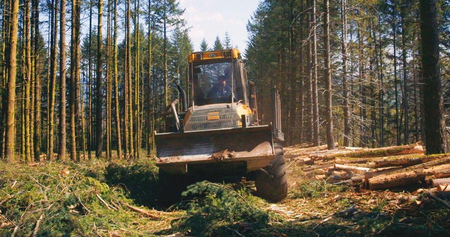 Le Temps des forêts [Photo 6]