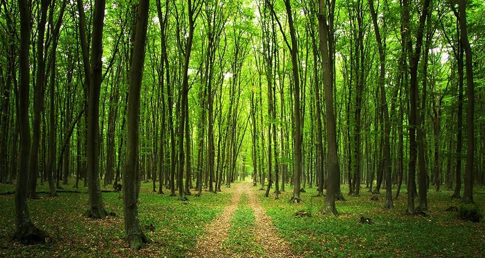 Le Temps des forêts [Photo 7]