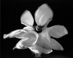 Danse des voiles [Photo de Loïe Fuller, danseuse de l'art nouveau]